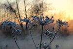 Морозного сада цветение