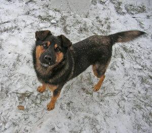 собака на первом снегу